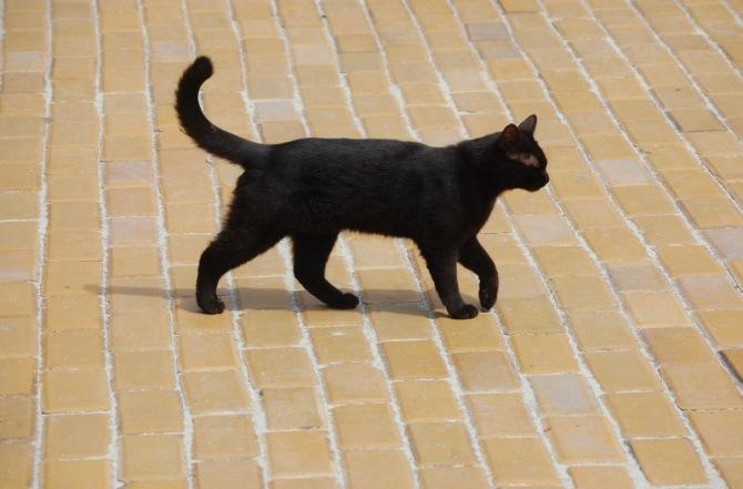 A megszólítható macska
